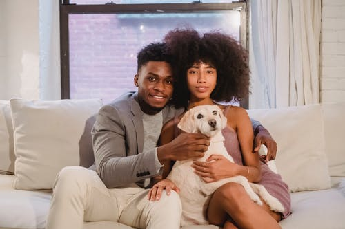 Loving young African American couple in elegant clothes embracing and stroking cute dog while resting together on comfortable sofa