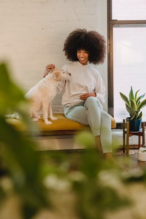 Joyful young African American lady with dark curly hair in casual clothes smiling and petting cute obedient dog while sitting on bench at home