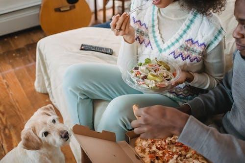 Foto profissional grátis de alimento, almoço, animal