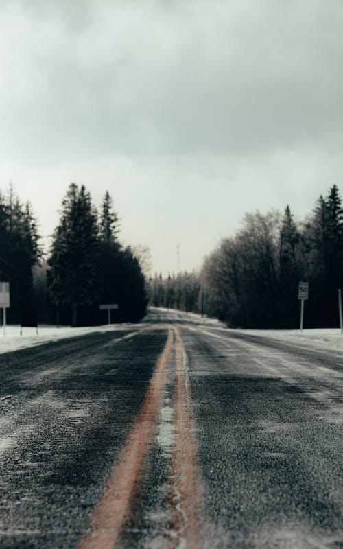 Free stock photo of pine, road, snow