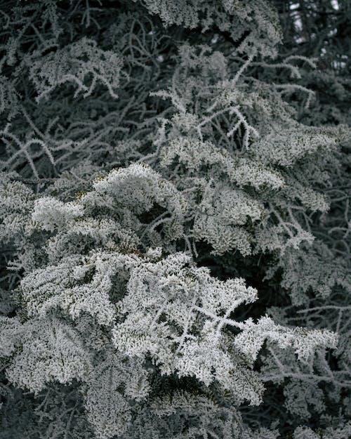 Free stock photo of freeze, snow, tree