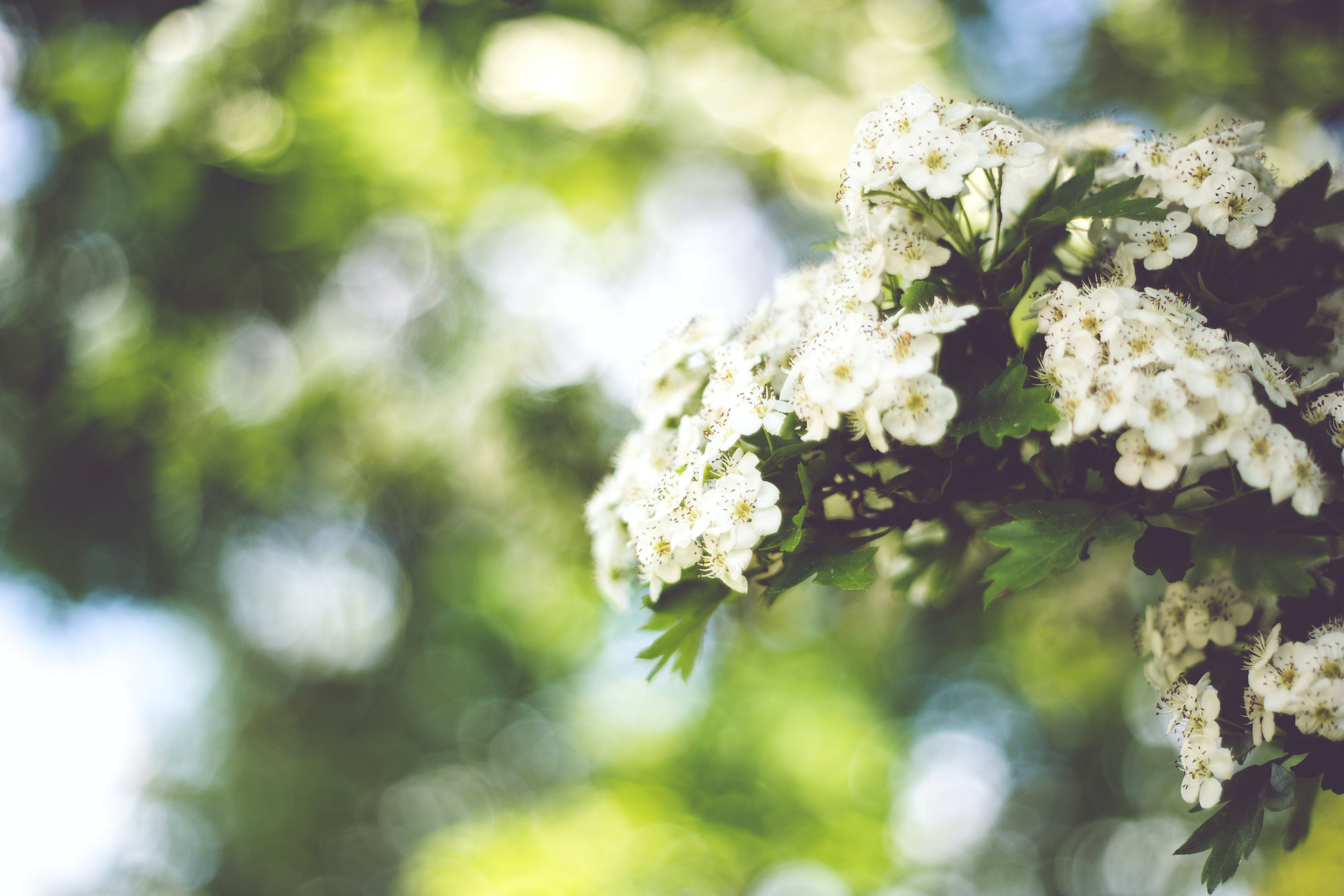 Little white flowers with bokeh / right