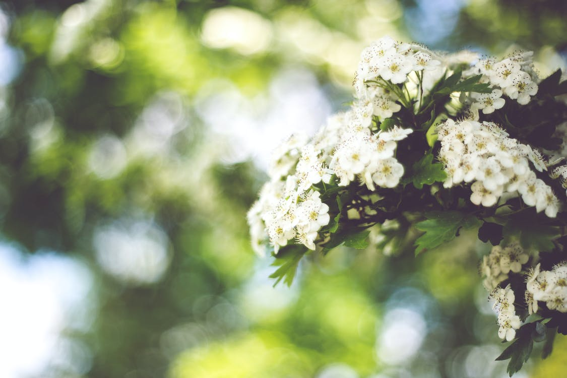 estiu, flor, flora