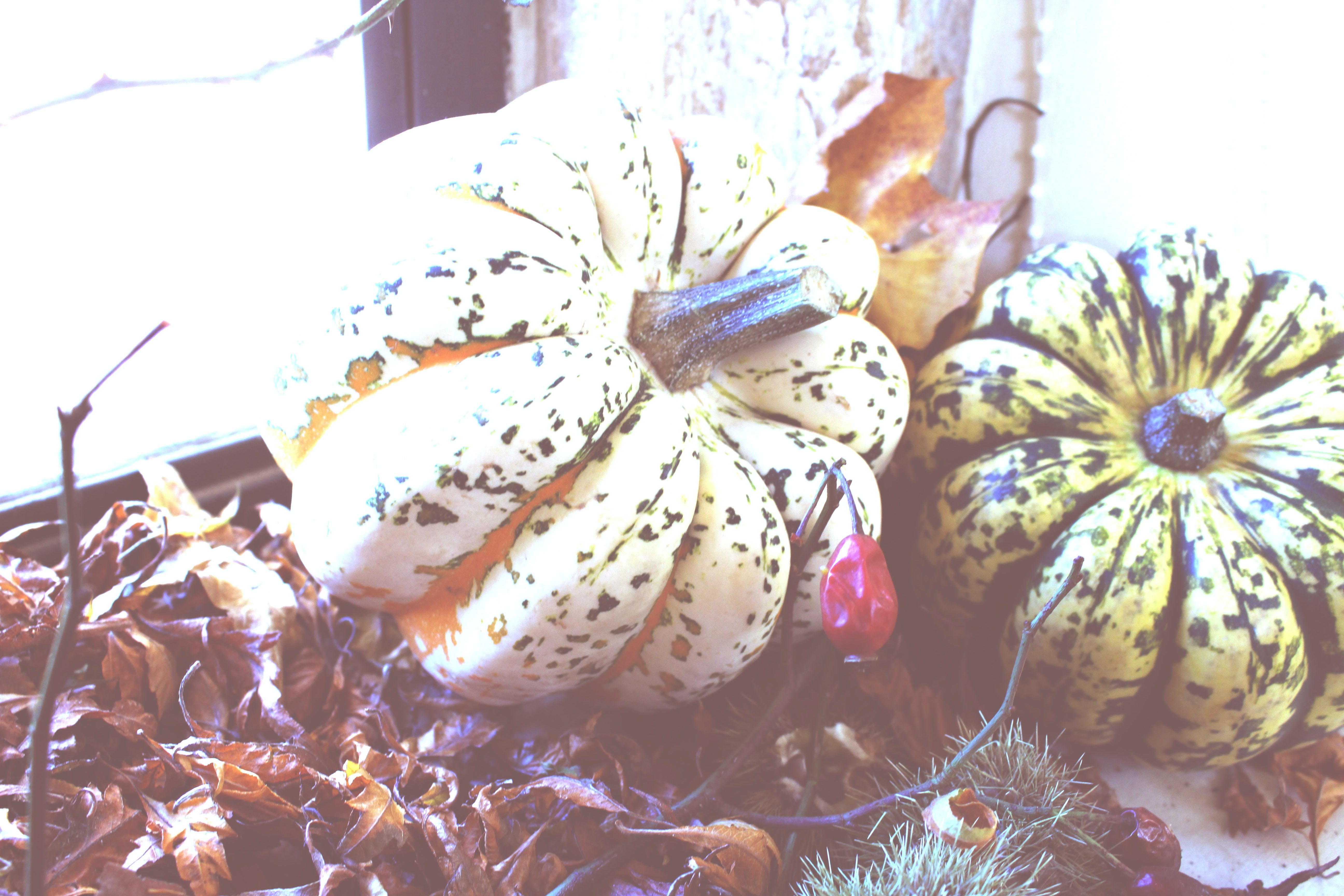 Two Green and Beige Pumpkins