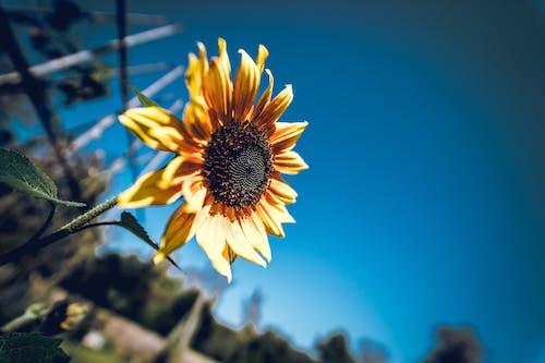 Foto d'estoc gratuïta de a l'aire lliure, botànic, brillant, cel
