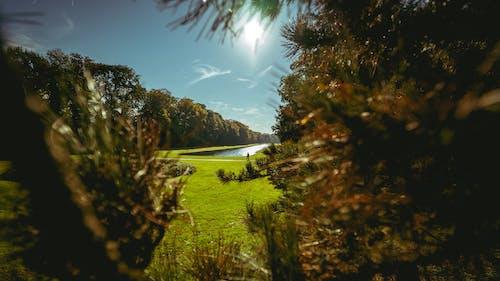 Ilmainen kuvapankkikuva tunnisteilla asfaltoitu polku, auringonsäteet, aurinko, kasvit