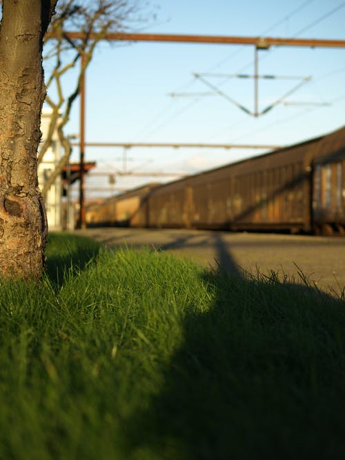 樹, 火車, 生鏽的, 綠草地 的 免費圖庫相片
