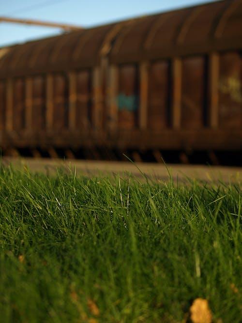 火車, 生鏽的, 綠草地 的 免費圖庫相片