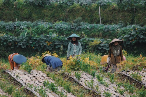 People Farming on the Field