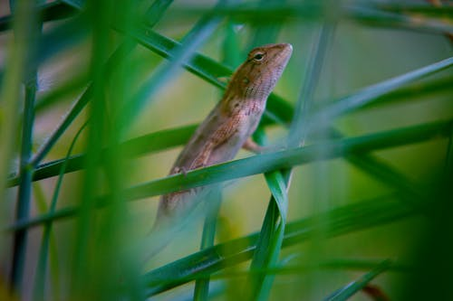 Small reptile in blades of grass