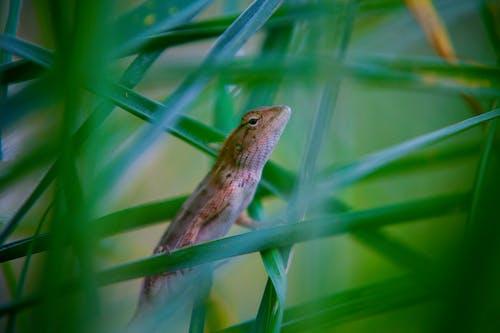 Little lizard crawling on green grass