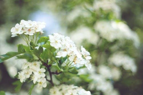Little white flowers with bokeh / left