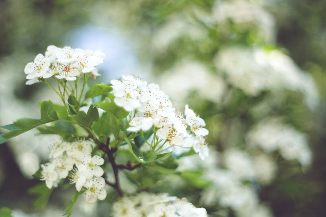 floare, floră, floral