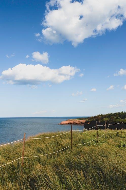 A Grass Field Near the Ocean