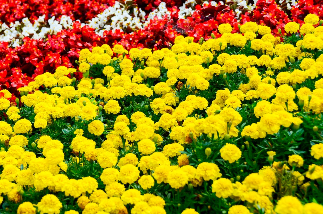 Close-Up Shot of Yellow and Red Flowers