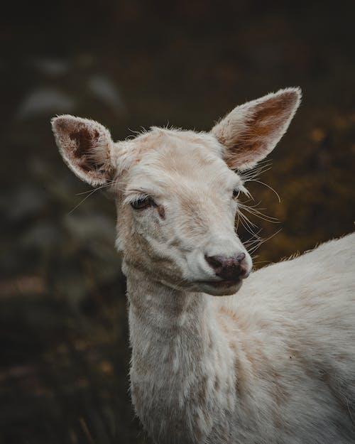 귀여운, 눈, 동물의 무료 스톡 사진