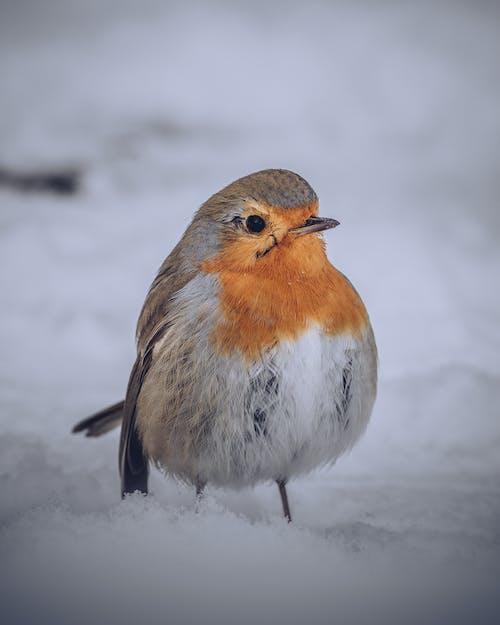 감기, 겨울, 경계의 무료 스톡 사진