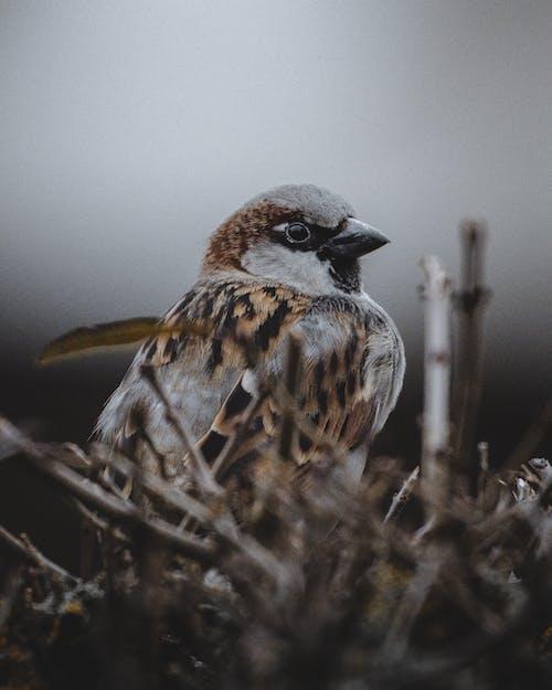 겨울, 깃털, 날개의 무료 스톡 사진