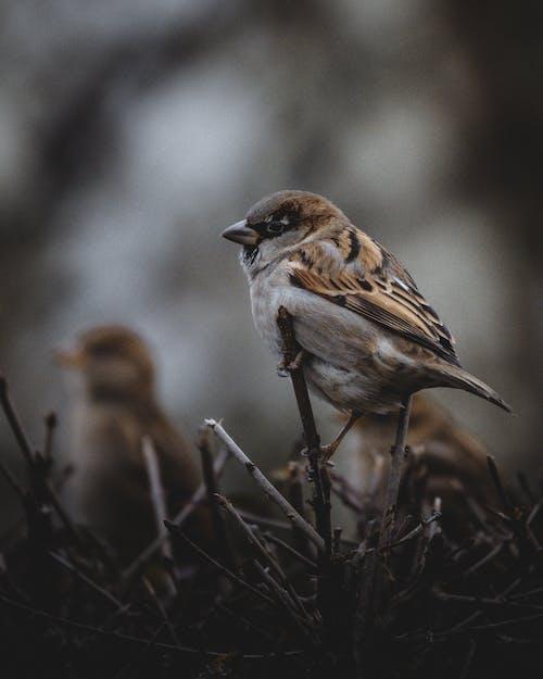 겨울, 깃털, 노래하는 새의 무료 스톡 사진