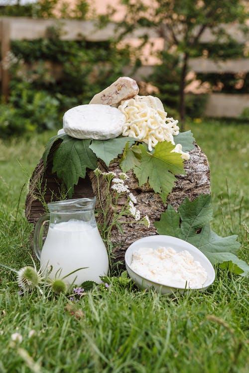 Free stock photo of cheese, farm, flora
