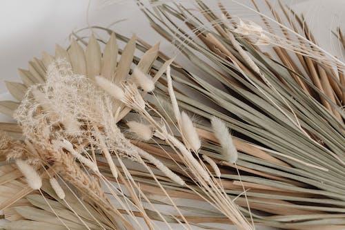 Fotobanka sbezplatnými fotkami na tému bambus, cereália, chlieb, dedinský