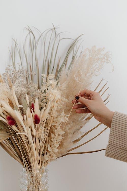 Fotobanka sbezplatnými fotkami na tému dedinský, flóra, hobby, jemný
