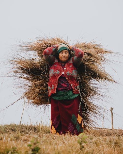 Gratis stockfoto met boerenbedrijf, cultuur, dorp