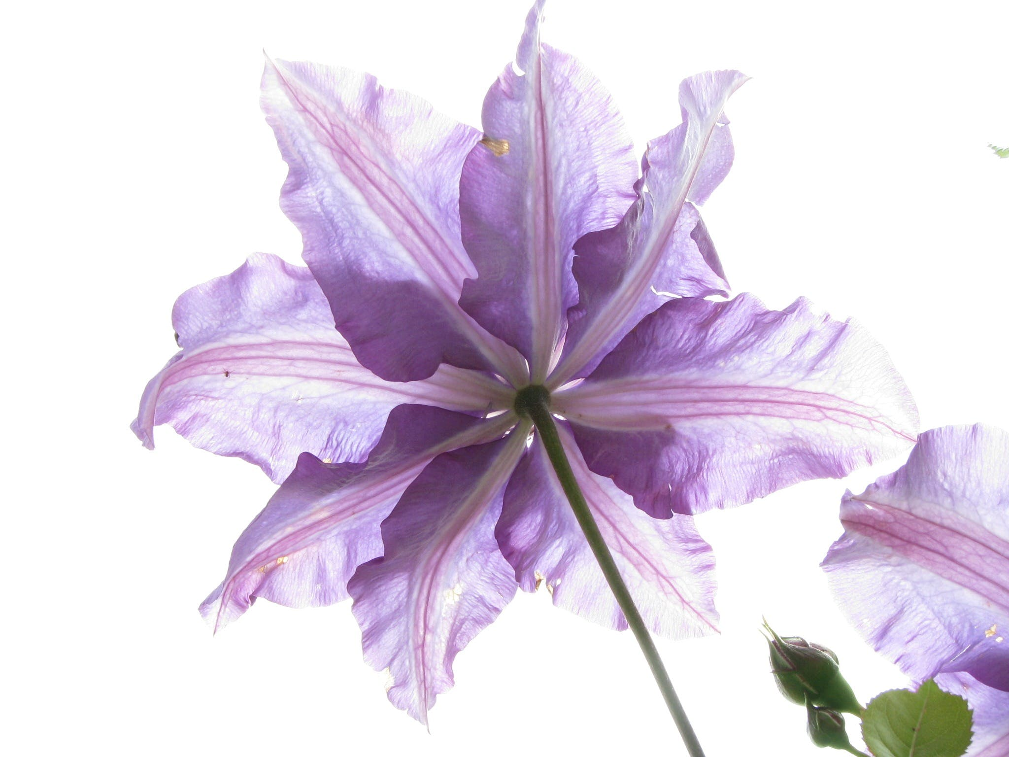 Free stock photo of nature, garden, flower, flora