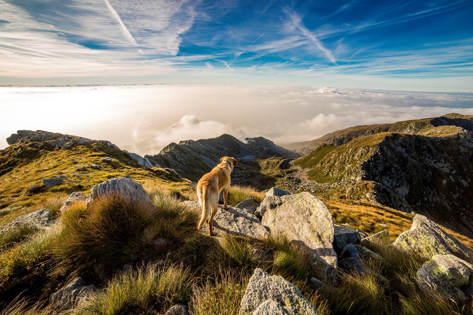 Brown and White Short Coat Dog on Mountain