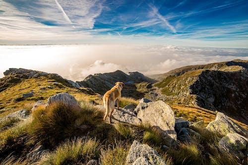Безкоштовне стокове фото на тему «вершина гори, гора, камені, краєвид»