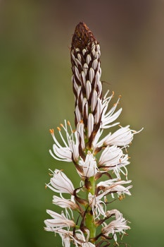 Brown and White Flower