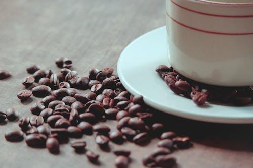 Fotos de stock gratuitas de alubia, amanecer, amante del café