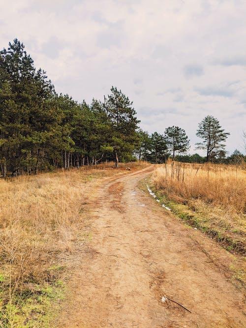 Photos gratuites de à feuilles persistantes, arbre, arbuste