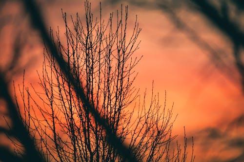 Бесплатное стоковое фото с вечер, дерево, закат, зима