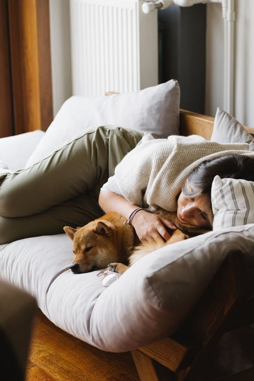Young female in casual clothes stroking adorable Akita Inu dog while lying together on comfortable sofa during weekend at home