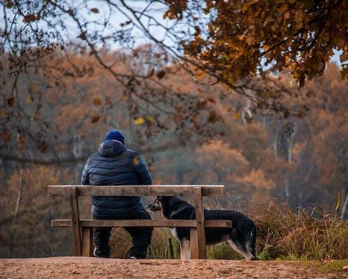 Free stock photo of adult, bench, bird