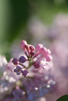 Selective Focus Photo of Pink Flower
