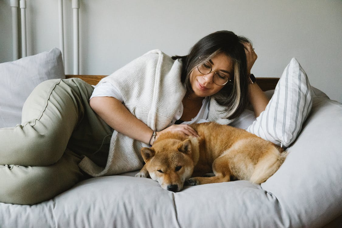 Relaxed young smiling lady with dark hair in casual clothes and eyeglasses stroking loyal napping Akita Inu dog while lying together on soft couch