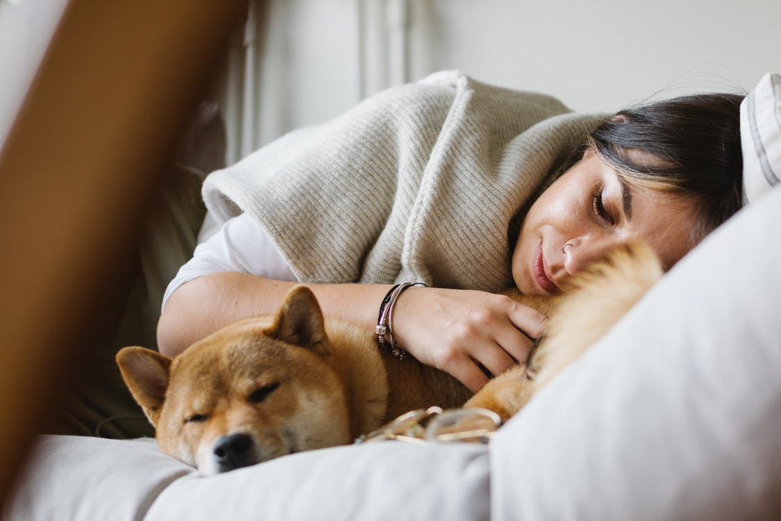 Young woman with purebred dog sleeping together on soft couch