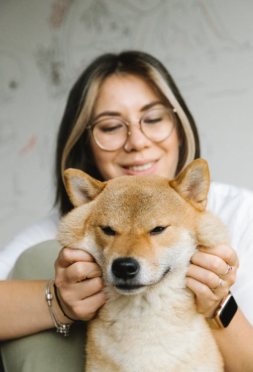 Smiling young lady stroking cute Akita Inu dog