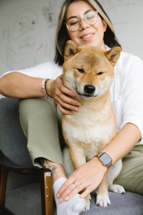 Crop happy young female owner in casual clothes and eyeglasses smiling while caressing adorable fluffy Akita Inu dog sitting together in armchair
