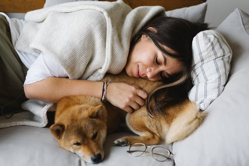 Glad woman and Shiba Inu dog resting together on couch