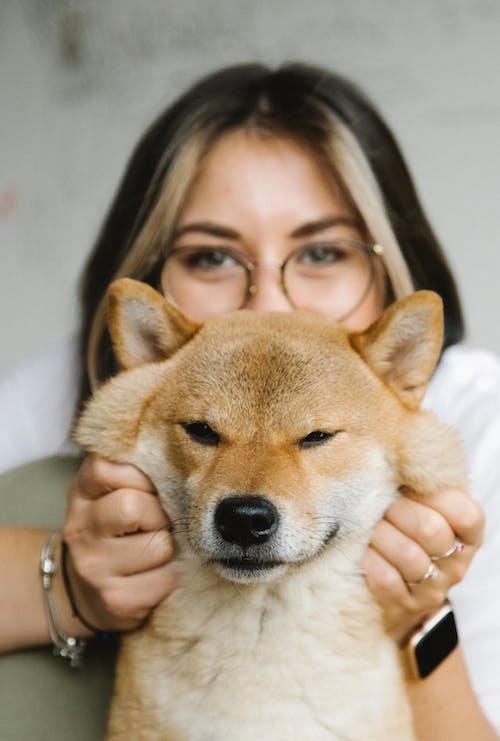 Content woman stroking purebred Shiba Inu dog