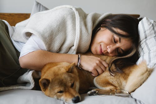 Smiling woman and purebred Shiba Inu dog resting on couch