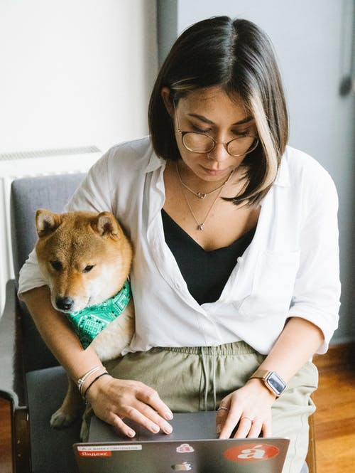 Concentrated young female in eyeglasses working on netbook placed on laps and hugging adorable Shiba Inu dog while sitting together on comfortable armchair