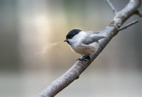Fotos de stock gratuitas de al aire libre, animal, animales en la naturaleza
