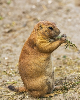 Brown and Black Rodent Eating Green Leaves during Daytime