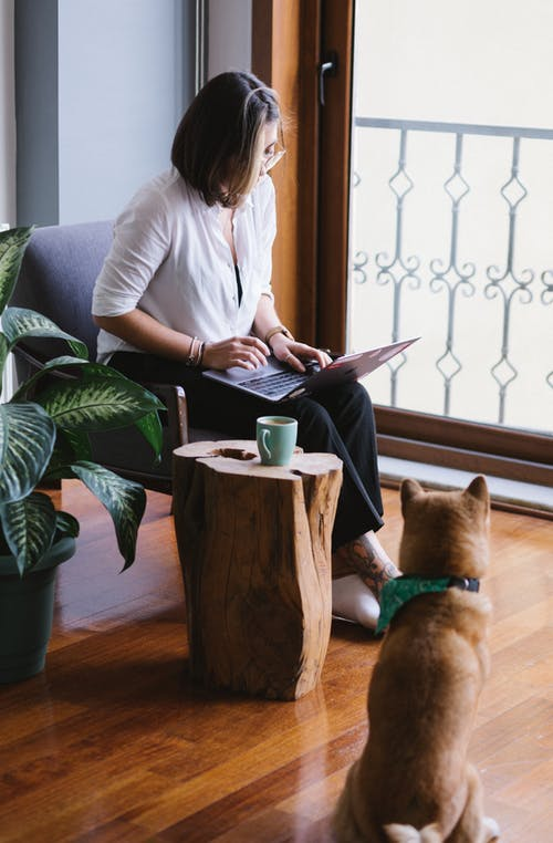 Focused young female wearing casual outfit and eyeglasses browsing netbook near cute Shiba Inu dog sitting on floor in stylish light living room