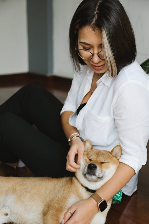 Crop woman stroking purebred Shiba Inu dog on floor