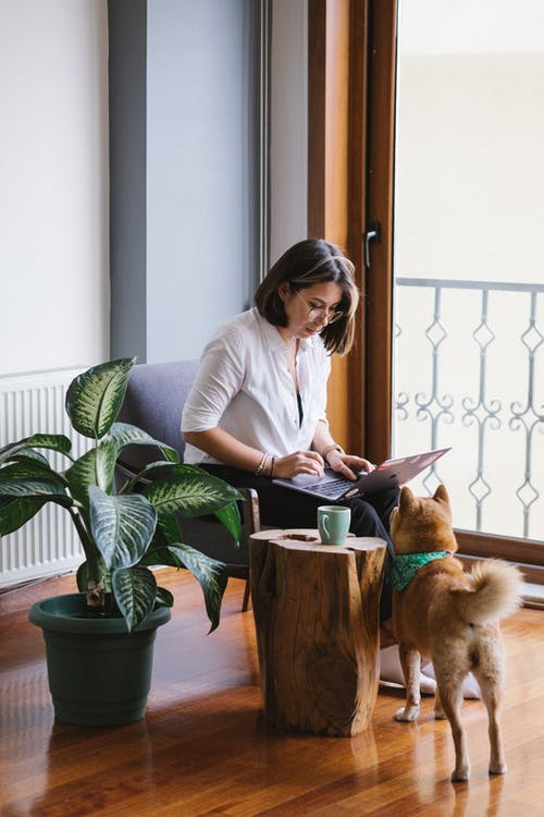 Focused young female in white shirt working on netbook near curious Shiba Inu dog wearing scarf on neck in light modern living room